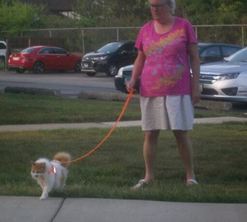 cat-harness-with-woman